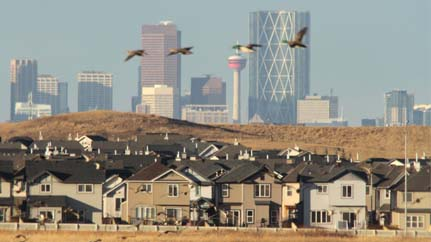Alberta housing market starting to slowdown says BMO