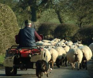 Do farm ATVs need insurance for public roads?