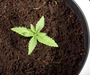 Broker: demolish marijuana grow-op houses