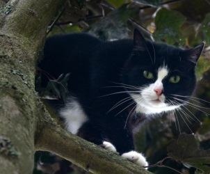 Call in the experts: firefighter rescues cop, cat from tree