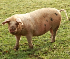 Live pigs and punching bags: weird things seen in the office
