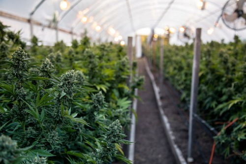 We have legitimacy in pot space, says Horizons