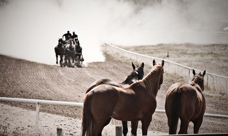 Keep the show bands but chuck the chuckwagons to end harm to animals at the Calgary Stampede