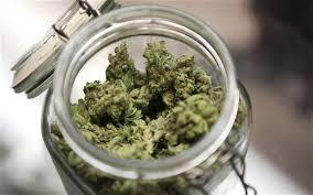 """Banning medicinal marijuana is """"un-Canadian,"""" says lawyer"""