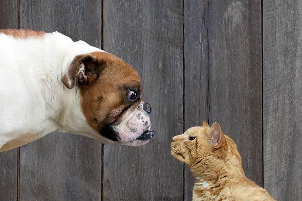 Lighter side: Motivating by animal instincts