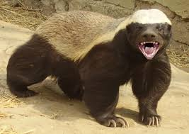"The Honey Badger ""don"