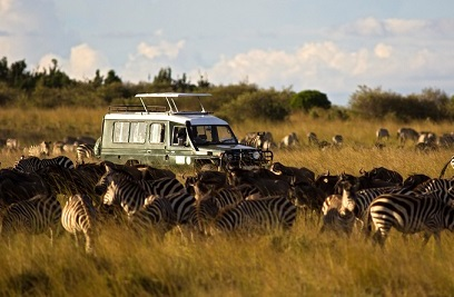 Why sending staff on safari is a savvy HR move