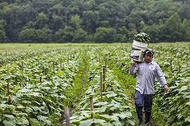 """Provincial laws permit """"slave labour"""""""