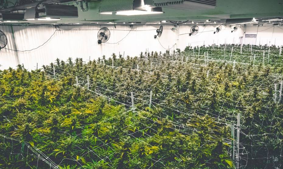 Deep pockets to rule under new cannabis licencing regime