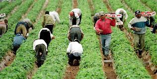 "Migrant worker program slammed as ""worse than slavery"""