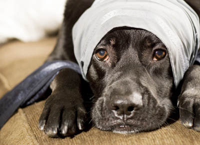 Developers 'paws' for thought; the influence of pets