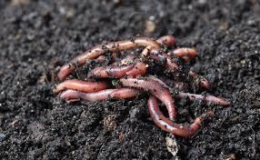 Chinese employees made to eat live worms as punishment